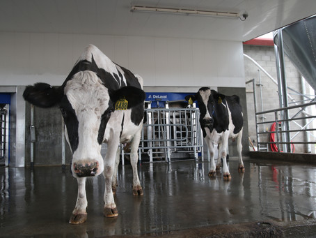Robots help carry on dairy family traditions