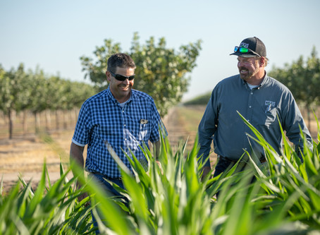 California dairy farmers change up their soil strategy