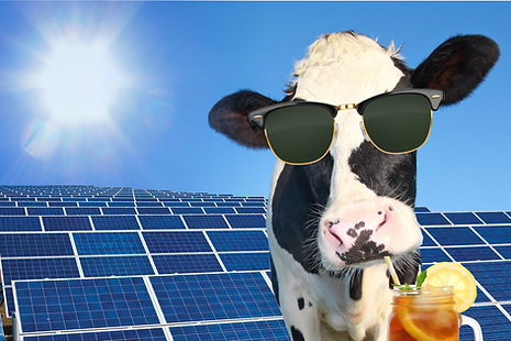 energy efficiency on California dairy farms