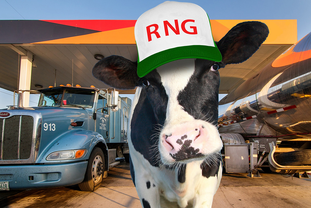 Cow-powered fuel is coming soon to California.