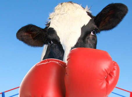 Dairy Methane Reduction Programs: Providing great bang for the buck
