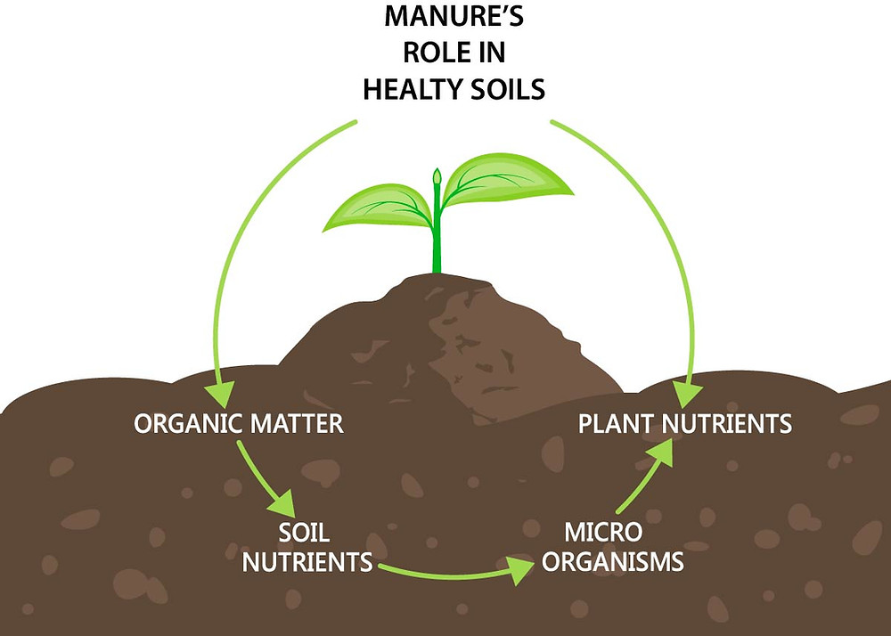 Dairy manure's role in healthy soils