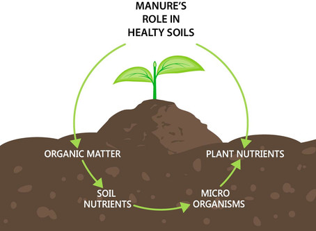 Dairies dig into expanding manure's role in healthy soils