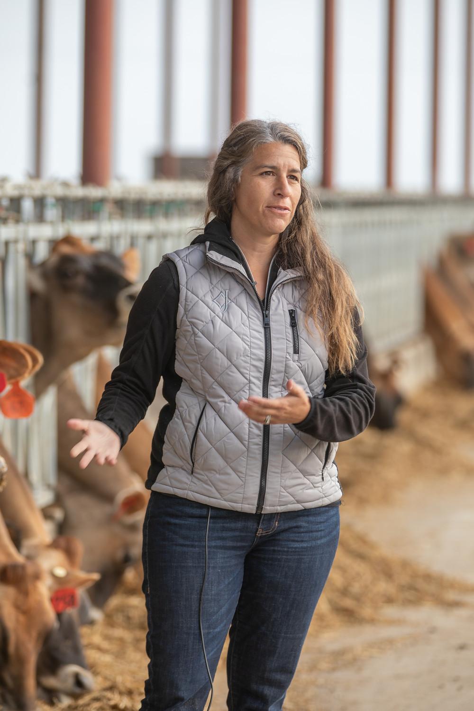 California dairy farmer and cows