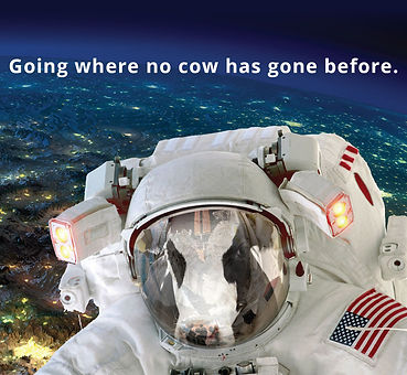 Where No Cow Has Gone Before.jpg