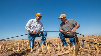 California dairy farmers explore drip irrigation to conserve water