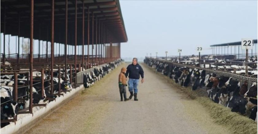 Dairy farmer Joey Airosa and his grandson check on cows