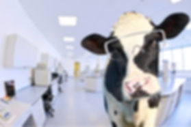 energy efficiency on California dairy farms
