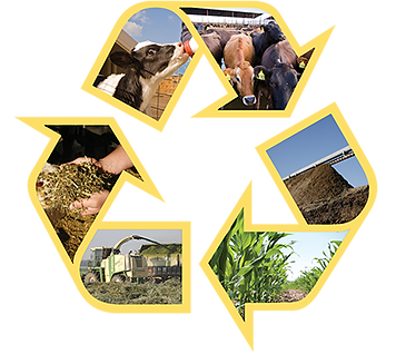 Dairy farm cycle of renewal