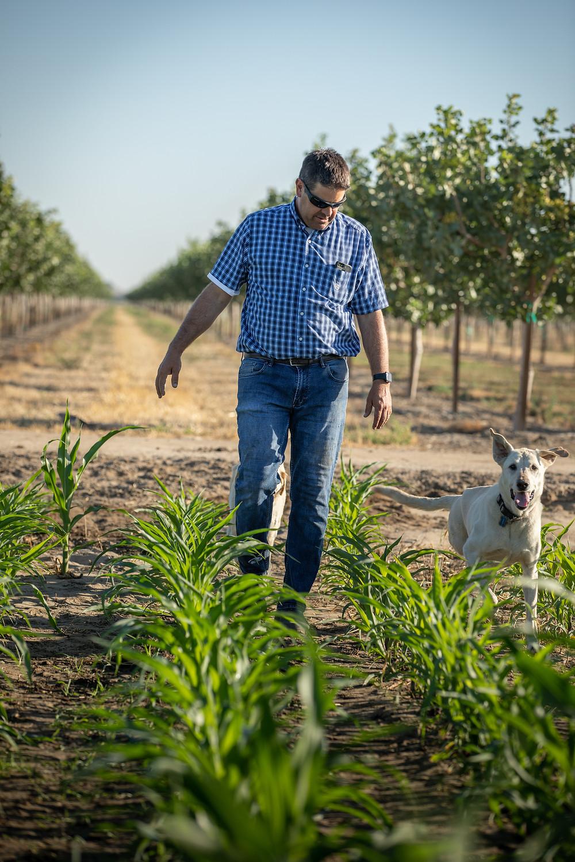 California dairy farmer checking field