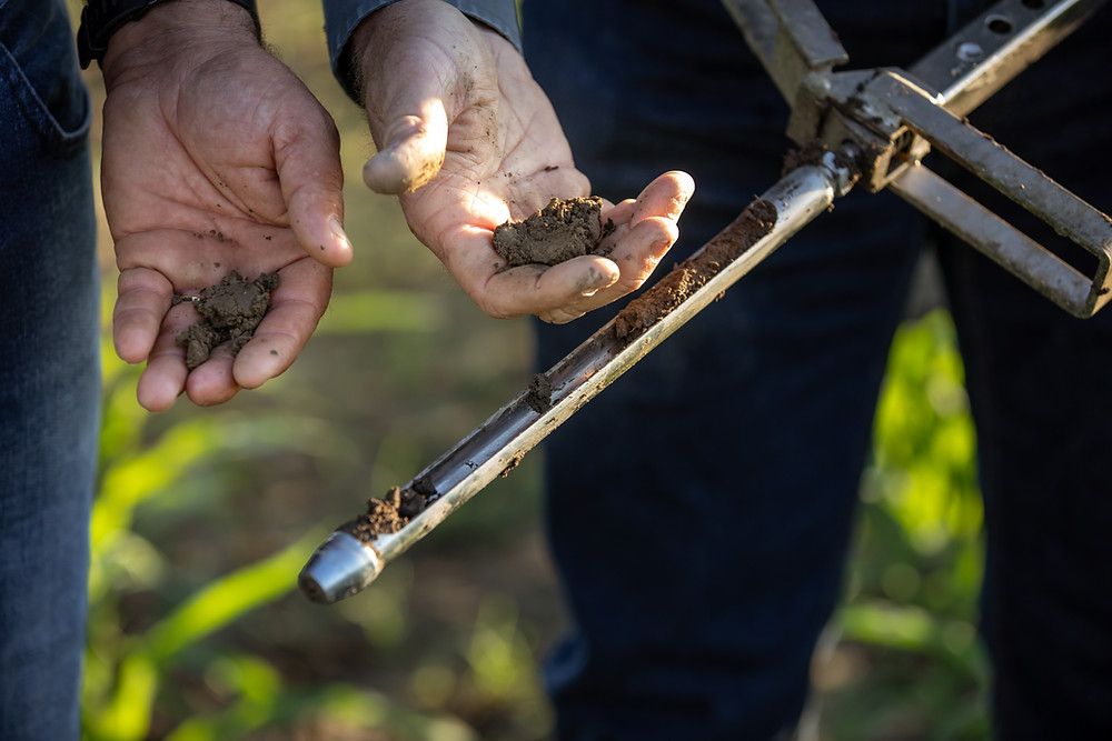 California dairy farmers use a soil probe to check moisture. Through precision farming, they are reducing water.