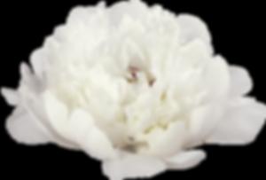 pionin kukka