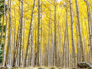 Top Four Places to Watch the Leaves Change in Northern Arizona