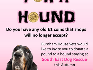 Pound for a Hound fundraising success for South East Dog Rescue