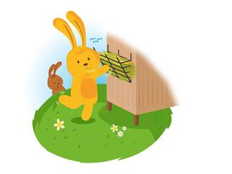 FREE Rabbit Health Checks during RAW Week ~ 17th-25th June 2017!