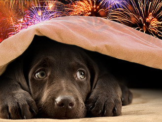 Prepare your pet for fireworks now and relax on November 5th!