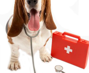 Canine First Aid course - Sign up now!