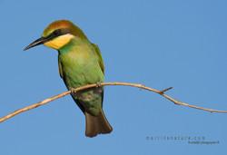 Best+of+Birds+035.jpg
