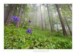 Slovakia may 2013 Mala Fatra web ©Martin Steenhaut 014wtmk.jpg