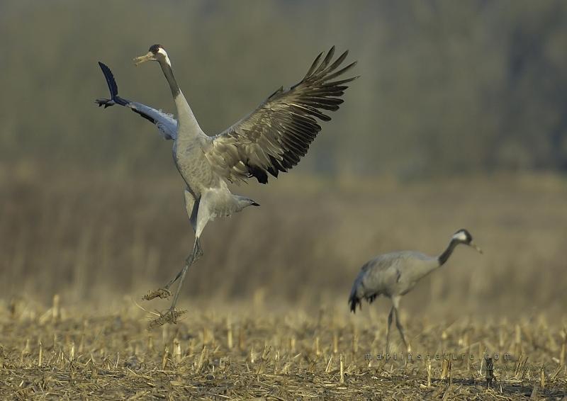 Best+of+Birds+051.jpg