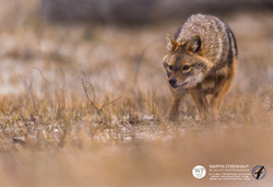 ©_SKUA_WILDPIX_Ultima_Frontera_jan_2015_Martin_Steenhaut_191.jpg