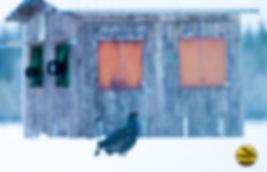 Black-grouse-hide0415-kopiëren.jpg