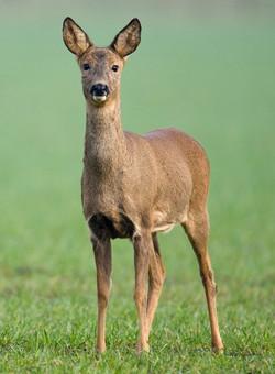 Best+of+Mammals+023.jpg
