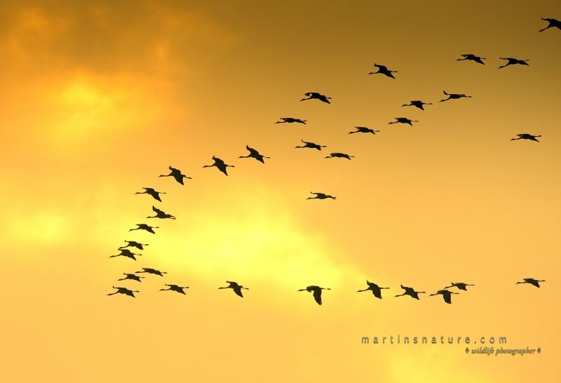 Best+of+Birds+060.jpg