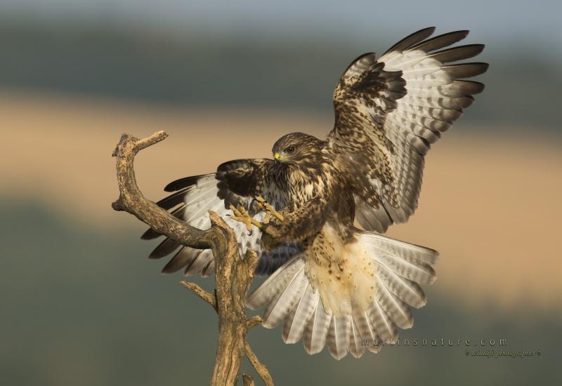 Best+of+Birds+003.jpg