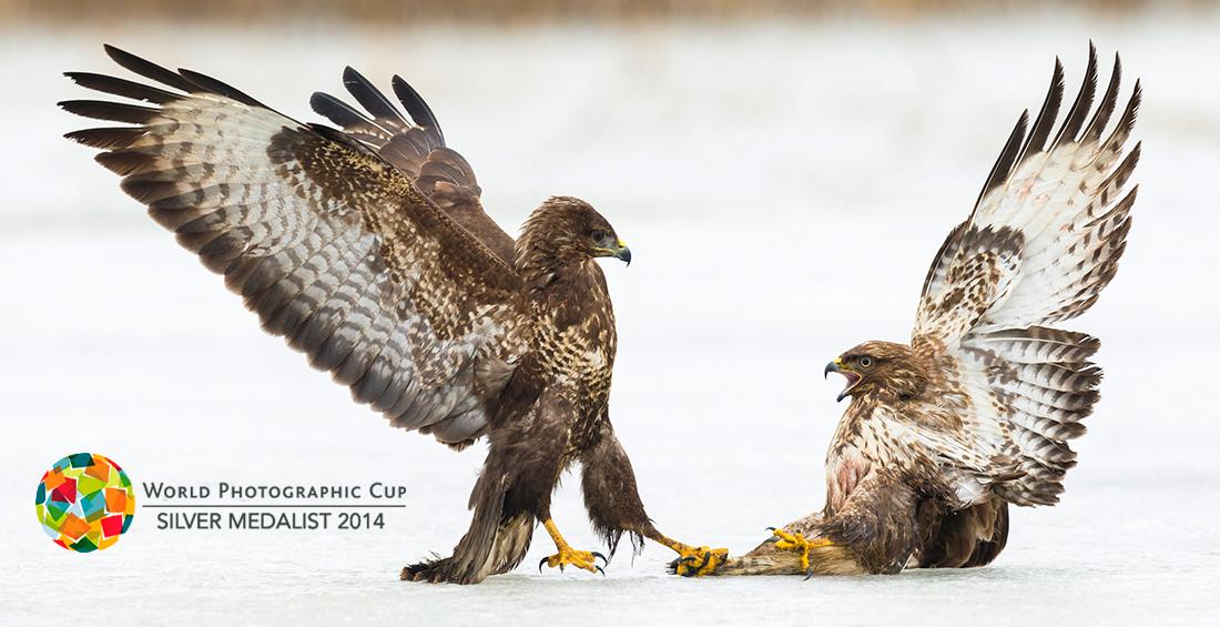 Dominance-FB2014-©Martin-Steenhaut