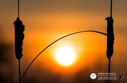 ©_SKUA_WILDPIX_Ultima_Frontera_jan_2015_Martin_Steenhaut_173