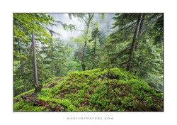 Slovakia may 2013 Mala Fatra web ©Martin Steenhaut 003wtmk.jpg