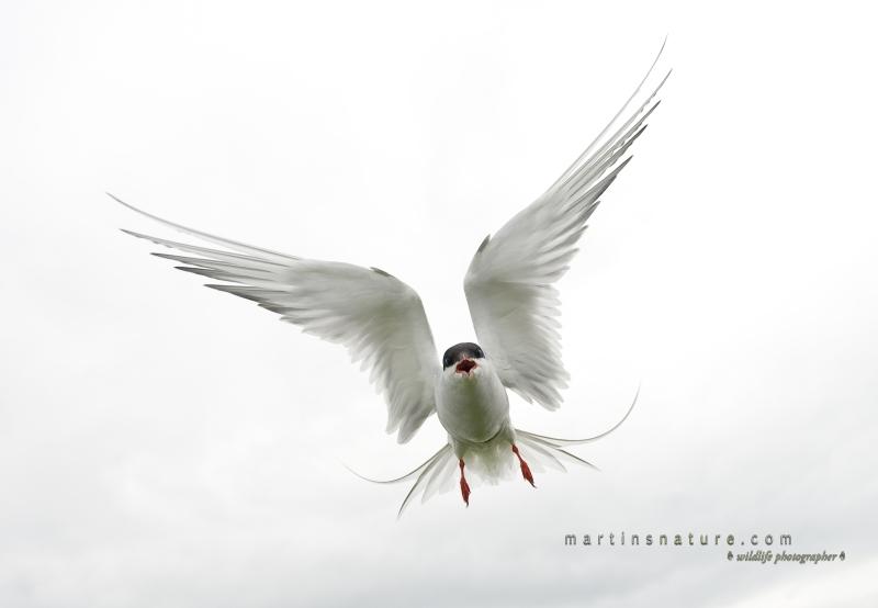 Best+of+Birds+012.jpg