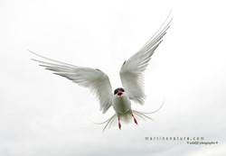 Best+of+Birds+012