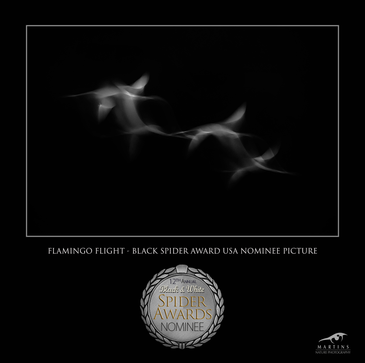 Flamingo-Flight-Martin-Steenhaut-Black-Spider-Awards-2017