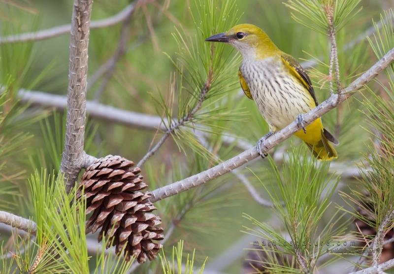Best+of+Birds+011.jpg