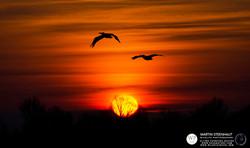 ©_SKUA_WILDPIX_Ultima_Frontera_jan_2015_Martin_Steenhaut_194