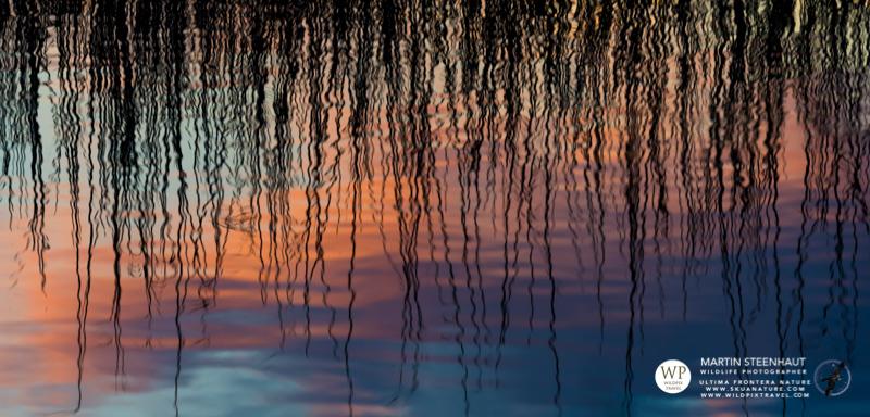 ©_SKUA_WILDPIX_Ultima_Frontera_jan_2015_Martin_Steenhaut_166.jpg