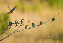 Best+of+Birds+104.jpg