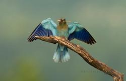 Best+of+Birds+007.jpg