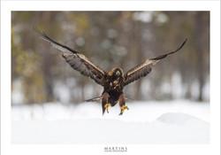 Zweden 2014_030214_0062 kopiëren.jpg
