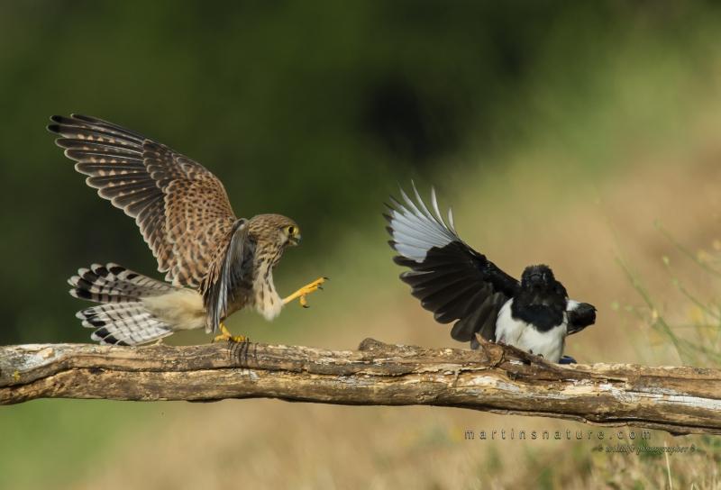 Best+of+Birds+016.jpg