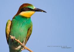 Best+of+Birds+001.jpg
