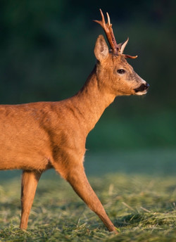 Best+of+Mammals+019.jpg