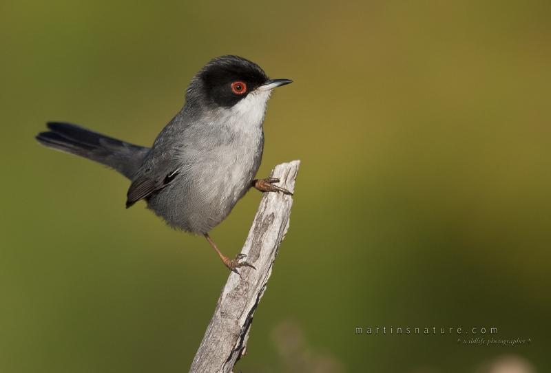 Best+of+Birds+027.jpg