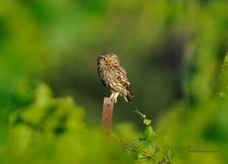 Best+of+Birds+065.jpg