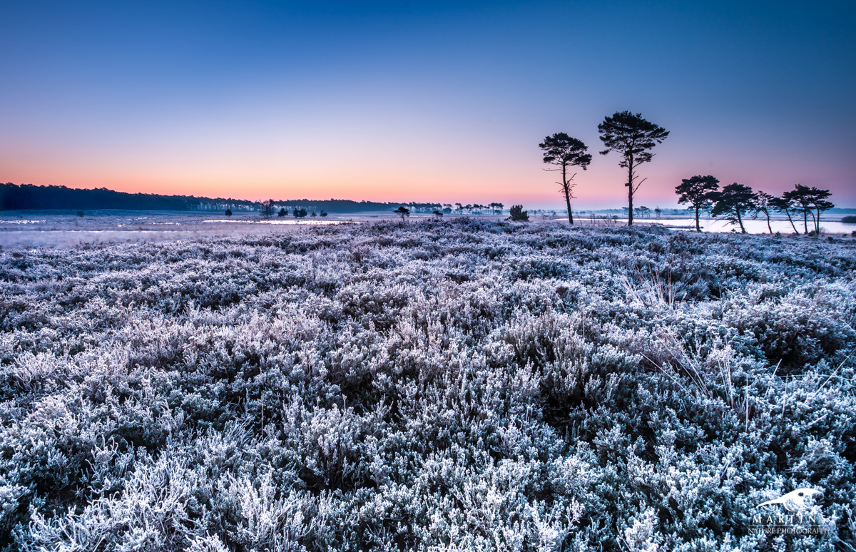 Heide_Vorst_feb_2016_©_MartinsNature-24-2