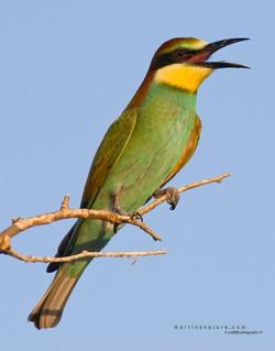 Best+of+Birds+071.jpg