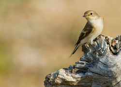 Best+of+Birds+041.jpg