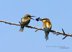 Best+of+Birds+062.jpg